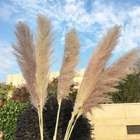 Ölümsüz Kurutulmuş Çim Reed Birincil Renk Büyük DIY Doğal Bitkiler Demet Çiçekler Ev Kadın Adam Süslemeleri Düğün Prop 1xl K2