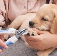 Professional Pet Nail clippper acciaio inox cane gatto per unghie per unghie per unghie per unghie per unghie per unghie per unghie per unghie comoda consulenza per cani