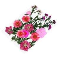 1 conjunto de plantas de flores Espécimen Herbarium DIY Flower Material Material Paquete Material de Shell Teléfono Móvil Lesso