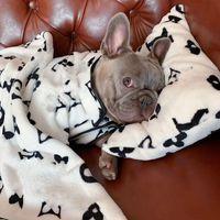 Nouveau vêtement de chien de chien de compagnie de compagnie en plein air classique Mode mode réglable Harnais pour animaux de compagnie manteau en peluche mignon Teddy Sweats à Sweats Sweats Petit chien