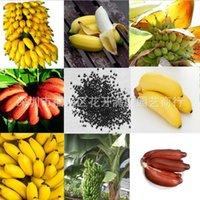 1Set / 100 stücke Seltene Zwerg Bananenbaum Bulksamen Mini Bonsai Tropische Früchte Topfpflanzen 477 S2