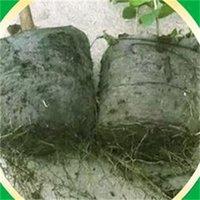 BiodeGradable بذور الحضانة أكياس 100 قطعة / الوحدة الحضانة زهرة الأواني زرع الخضروات تربية الأواني حديقة زرع النباتات الحضانة 196 S2