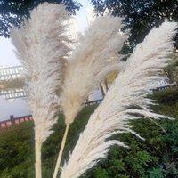 Dekoratif Çiçekler Çelenk Beyaz Doğal Reed Kurutulmuş Çiçek Büyük Pampas Çim Buket Düğün Töreni Dekorasyon Modern Ev Güz Dekor