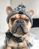 Outono e bola de inverno bola mantém aquecido e À prova de ventosa bola de confecção de malhas de confecção de malhas do cão lutando o chapéu quente novo animal de estimação headgear 107 v2