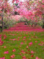 Красивый сад розовый цветок дерево виниловые фотографии фона весенние зеленые травы лепестки фото стенд фона для свадебных студийных реквизитов