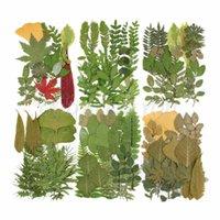 Flores decorativas guirnaldas prensadas de hojas reales Surtido de planta Surtido de la planta Herbarium Hoja para la resina de bricolaje Arte artesanía Arte de la joyería Suministros de decoración DR