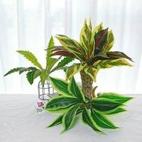 50 cm 11LEVE plantas artificiais de parede de parede folhas tropicais Falske Dracaena árvore plástica da árvore de magnólia para o casamento decoração do jardim