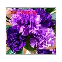 Продвижение 10 цветов доступно гвоздики для гвоздики многолетних цветов горшечные садовые растения Dianthus Caryophyllu Jllzzz BDEB