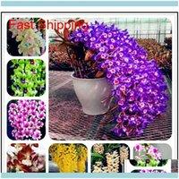 Otro Patio, Césped Home GardenTher Otro Jardín Suministros de jardín 100 PCS Embalaje Dendrobium Semillas Potted Flower Seed Variety Completa la tasa de cierbos 9