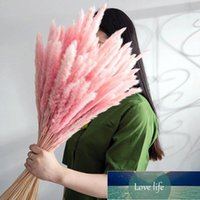 Colors Natural Dried Flowers Small Pampas Grass Phragmites For Decor Home DIY Wedding Plants Decoration Artificial Decorative & Wreaths