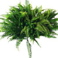 장식 꽃 화환 프로모션! 10pcs 인공 보스턴 고사리 부시 실크 식물 가짜 녹지 홈 장식 교수형
