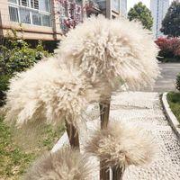 Dried Flower 50Pcs lot Wholesale Phrag Mites Natural Dried Decorative Pampas Grass For Home Wedding Decoration Flower Bunch 56-60cm