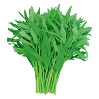 10 грамм водный шпинат овощной бонсай Kangkong, речные семена шпината, китайский шпинат или укрепление устойчивости.