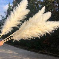 80cm Pampas Grass Natural Reed Casamento Secado Flor Grande Cerimônia Moderna Decoração Home Valentim Day Transporte rápido