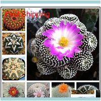 Altro Patio, Prato inglese Casa GardenAlther Forniture 100 Pz Cactus esotico Cactus giapponese Rare Suults Smentite Fiore Sementi Bonsai Semi Piante da interno Perenn