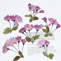 장식 꽃 화환 실제 건조 된 촛불에 대 한 자연 작은 사쿠라 줄기 벚꽃 수지 주얼리 베고니아 꽃 mol