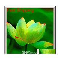 Promotion ! 10 pcs pas cher eau de lys graines de lys coloré bonsaï balcon fleur bol lotus plante aquatique pérennale po jllink mx_home