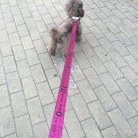 Fashion Pet Lead Guinzaglio Collare per cani Cat Nylon Walk Ins Style Cool Sicurezza all'aperto Bulldog Allenamento Piccolo Mezzo 2021