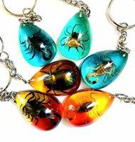 Ücretsiz kargo 12 adet Vogue Gerçek Örümcek Akrep Beetle Damla Tasarım Anahtarlık Örneği