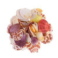 Novelty Items 1 Bag About 250g Natural Shell Conch Ornaments Delicate Mixed Sea Style DIY Po Frame Materials Showcase Fish Tank Aquarium La