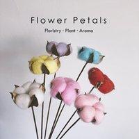 Color mixto Flor seca natural Ramas de algodón 6 tallos Ramas de algodón artificial Reed Pampas Hierba