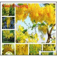 Altın Sarı Wisteria Tohumları 20 Adet Nadir Mor Bonsai Wisteria Ağacı Kapalı Açık Süs Bitkileri Peren Qylmax Homes2007