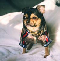Lettre imprimé veste animal de compagnie style extérieur chiot manteau chien vêtements Teddy schnauzer bichon chiens vêtements