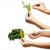 Kale Chard كولارد جرينز هيرب المتعرية looseleaf الروزماري الزعتر فضفاض أوراق عشبة المتعرية أدوات المطبخ أدوات الخضروات 50 قطع إرسال HWF5282