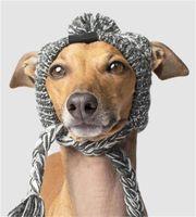 الخريف والشتاء الفراء الكرة يحتفظ دافئ ويندبروف نفخة الكرة حقيبة الحياكة الكلب القتال قبعة الساخنة جديد الحيوانات الأليفة القبعات 107 v2