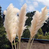 200 adet 60-80 cm Beyaz Doğal Reed Kurutulmuş Çiçek Büyük Pampas Çim Buket Düğün Çiçek Töreni Dekorasyon Modern Ev Dekorasyon
