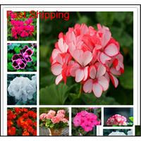 100 ADET Renkli Bonsai Sardunya Çiçek Nadir Alacalı Sardunya Bonsai Saksı Kapalı Odalar Ev Bahçe Flowe Qyldka HOMES2007