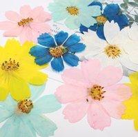 Guirnaldas de flores decorativas 120pcs 4-10 cm prensado cosmos cosmos planta planta herbario para joyería postal invitación tarjeta teléfono caja Bookm