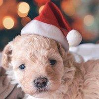 الحيوانات الأليفة عيد الميلاد القبعات عيد الميلاد الصغيرة أفخم سانتا قبعة للحيوانات كلب القط قبعة عيد ميلاد سعيد زينة للمنزل كاب DWB10104