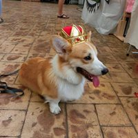 Dog Apparel Cat Headwear Little King Queen Cap Funny Cute Pet Puppy Crown Hat Costume For Cosplay Party Decor Product