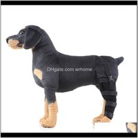 Apparel Dog Supplies Home & Gardenproducts: Selling Walking Pet Aids For Dogs After Operation Drop Delivery 2021 Cqnuf