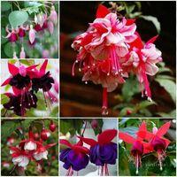 الجملة حديقة لوازم فانوس بذور زهرة شنقا رأسا على عقب أربعة مواسم بوعاء حديقة نباتات نباتية بذور زهرة بذور فناء ZC141