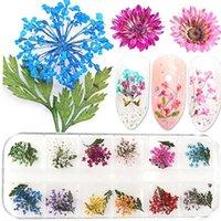 مقصورات مزيج الزهور المجففة الأظافر زينة والمجوهرات الطبيعية الأزهار ورقة ملصقات 3D آرت ديكو تصاميم