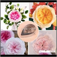 Bakeware Kitchen, Dining Bar Home & Garden7Pcs Petal Rose Cutting Die Cutters Bread Making Baking Mould Fondant Mold Biscuit Craft Diy Family