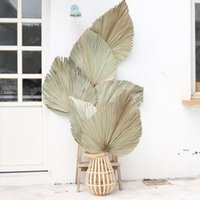 10 teile / los echte Cattail-Lüfter aufbewahrt trocken natürliche frische Palmblätter für immer Pflanzenmaterial für home hochzeitsdekoration see schiff ewe6455