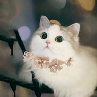 고양이 의상 여름 복고풍 패션 달콤한 늑대 모피 고양이 레이스 꽃 칼라 귀여운 새끼 고양이 강아지 애완 동물 목 액세서리 PO 소품