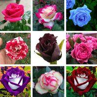 홈 정원 용품 60 PC / BAGRARE 블루 핑크 블랙 여러 가지 빛깔의 장미 식물 종자 발코니 화분 꽃 씨앗 마당 공급 ZC139