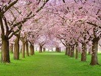 Розовые Цветочные Дерево Свадебные Виниловые Фотографии фона Открытый Весна Фото Будут Фоны для детей Студия Реквизиты