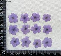 Guirnaldas de flores decorativas 120 unids prensado secado 1-2 cm mini verbena flor planta herbario para joyería postal tarjeta de invitación caja del teléfono