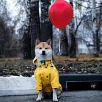 النمط البريطاني ins ناسفة العصرية العلامة التجارية الحيوانات الأليفة windproof و haidproof هوديي متوسطة كبيرة الكلب المعطف جرو سترة الملابس