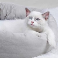 Cat Beds & Furniture Pet House Bed Warm Fleece Round Dog Kennel Winter Pets For Small Dogs Cats Soft Sofa Cushion Mats With Pillow