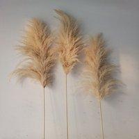 새로운 20pcs / 로트 도매 phragmites 자연 말린 장식 팜플렛 잔디 집 결혼식 장식 꽃 무리 56-60cm 209 v2