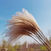Natural Dried Small Pampas Grass Decor Real Wedding Flower Home Ornament Flowers Plant Bouquet Decorative & Wreaths