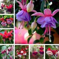 Fournitures de jardin 200pcs / lot multiple couleur fuchsia chlorophytum lanterne graines de bonsaï lanterne fleurs maison graine de plante intérieure pour patio zc140