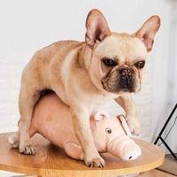 Cane sonno peluche peluche giocattolo giocattolo maschile pet sex spack sheack barboncino gioco compagno compagno francese bulldog gatto compagno estrus animal stress rel Q0727