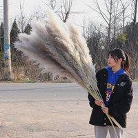 20pcs / lot 도매 phragmites 자연 말린 장식 팜파스 잔디 홈 웨딩 장식 꽃 무리 56-60cm 500 s2